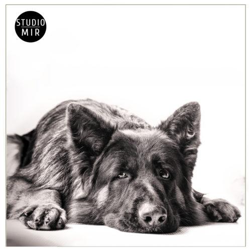 18-03-Dog2