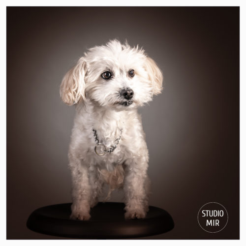 18-11-21-bfriday-dog