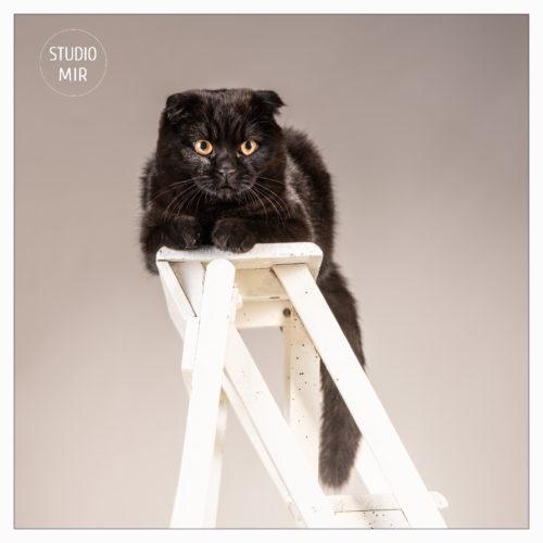 18-11-26-cat