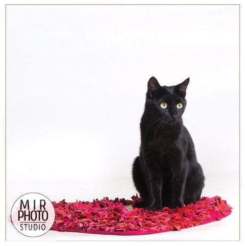 Réservez une séance photo pour votre chat