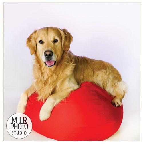 Réservez une séance photo pour vos animaux