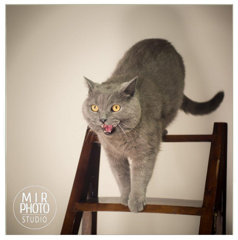 portrait de vos animaux chien chat