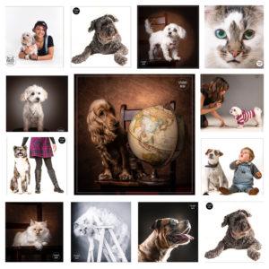 portraitiste animalier
