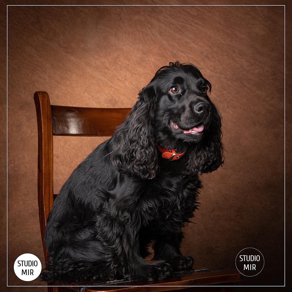 Photographe pour chien dans le Val de Marne