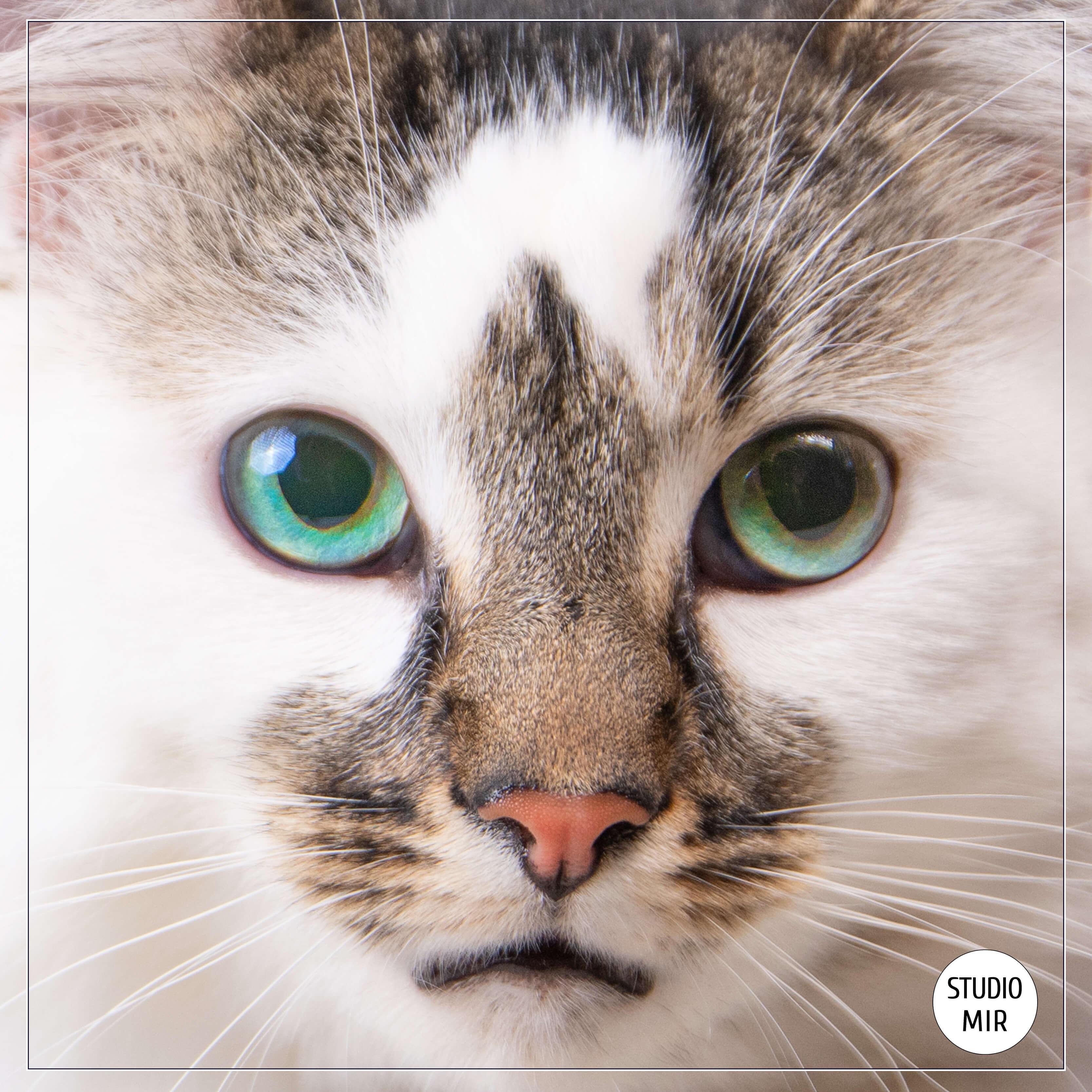Photographe studio animal de compagnie avec un chat