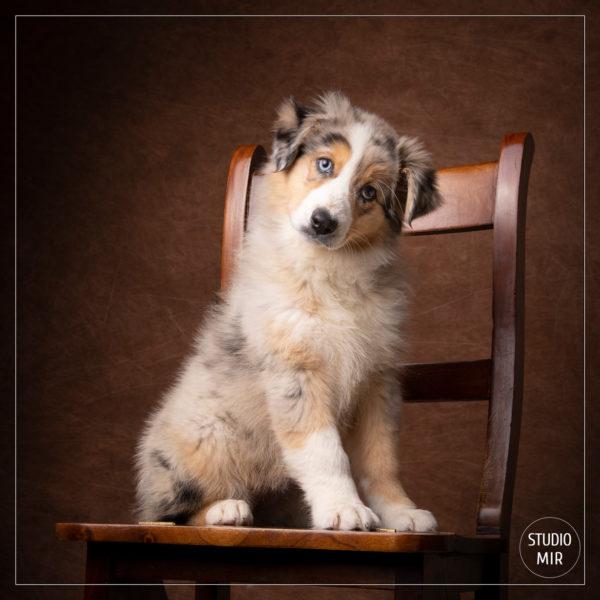 Idée cadeau originale pour noël : séance photo avec un animal de compagnie près de Paris