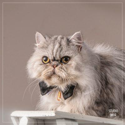 Photographe chat en région parisienne