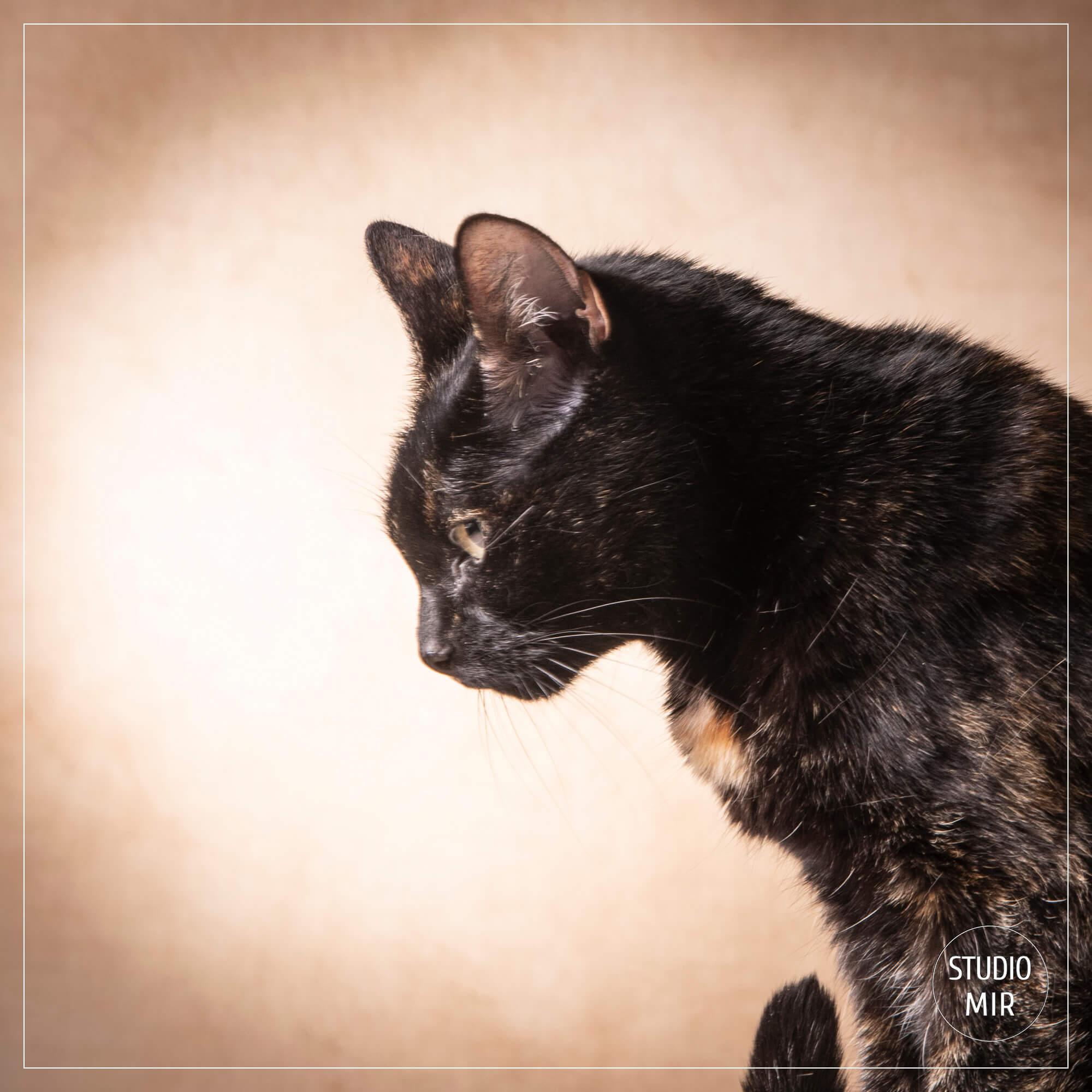 mon chat portrait