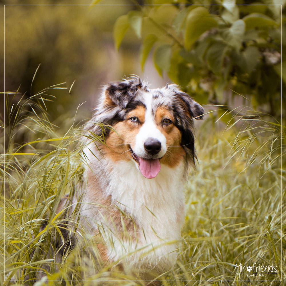 Photographe chien en extérieur dans le Val de Marne