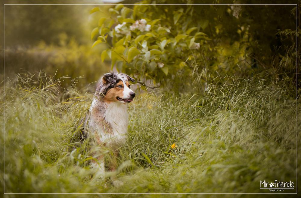 Photographe chien en exteirieur dans le Val de Marne