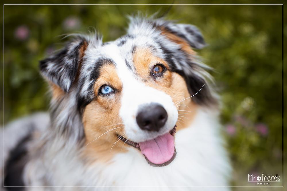 Photographe animalier : Séance photo chien en extérieur près de Paris