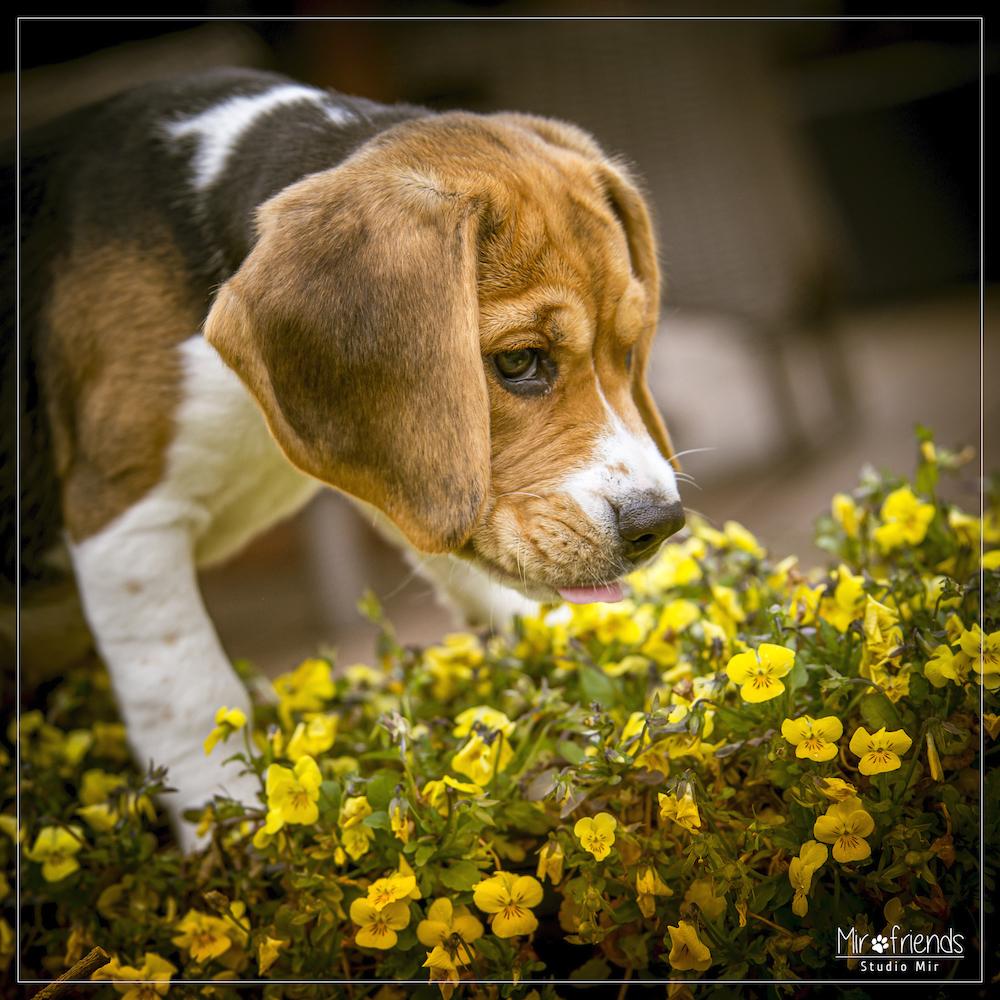 Photographe chien dans un parc dans le Val de Marne
