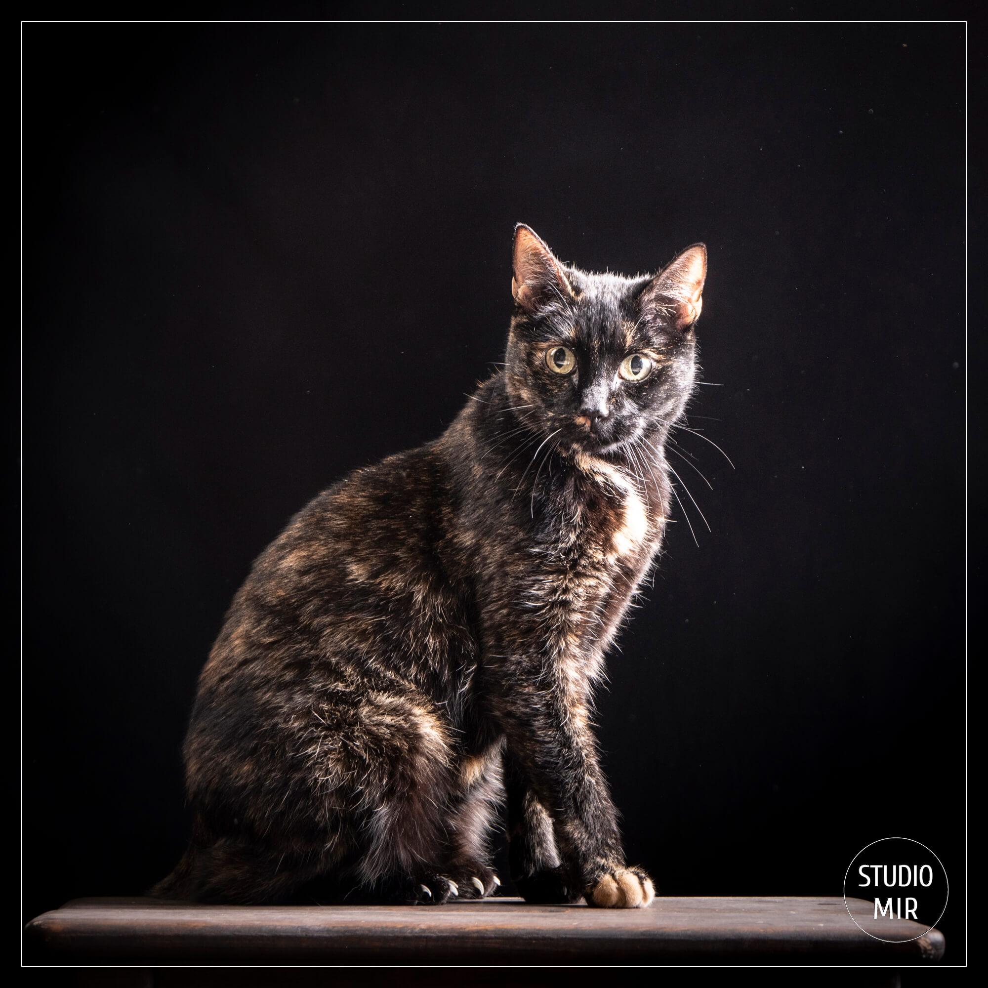 Photographe chat près de Paris en Ile-de-France